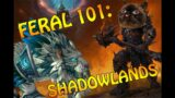 Feral 101: Shadowlands Feral Guide