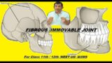 FIBROUS / IMMOVABLE JOINT / SYNARTHROSIS