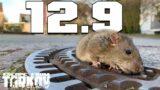 I wish there was no Wipe – Escape from Tarkov 12.9