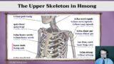 The Upper Skeleton in Hmong