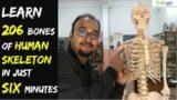 Human Skeletal System | 206 Bones | BioLogic