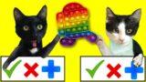 TRADEO POP IT de among us pero con gatos graciosos Luna y Estrella / Videos de gatitos chistosos